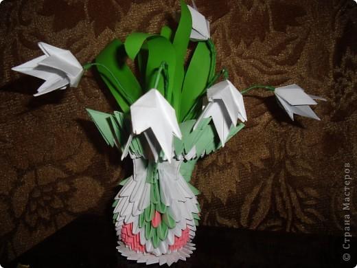 Это мой кактус фото 6