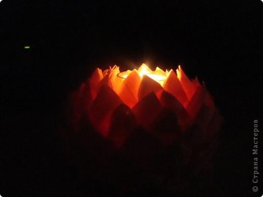 светящийся лотос фото 2