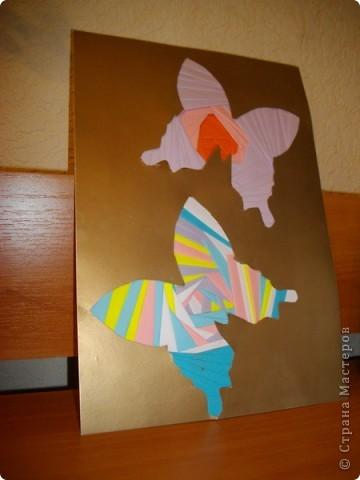 Яркие бабочки))
