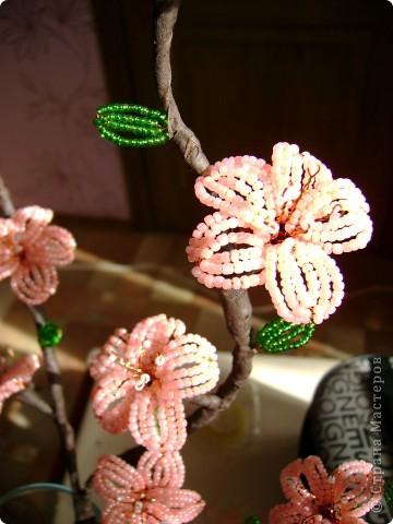 самые первые цветы,появляющиеся на фруктовых деревьях- это абрикос и персик,затем расцветает вишня.  фото 2