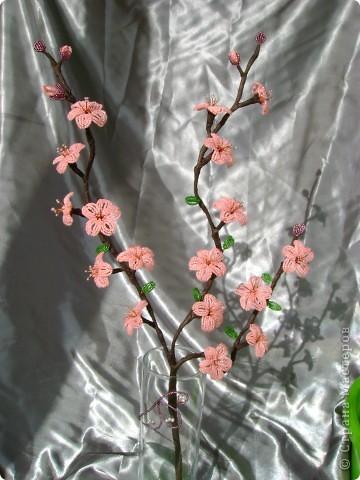 самые первые цветы,появляющиеся на фруктовых деревьях- это абрикос и персик,затем расцветает вишня.  фото 3