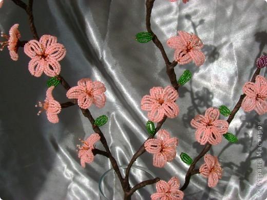 самые первые цветы,появляющиеся на фруктовых деревьях- это абрикос и персик,затем расцветает вишня.  фото 1