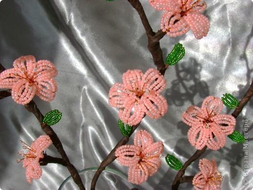 самые первые цветы,появляющиеся на фруктовых деревьях- это абрикос и персик,затем расцветает вишня.  фото 4