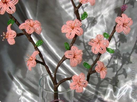самые первые цветы,появляющиеся на фруктовых деревьях- это абрикос и персик,затем расцветает вишня.  фото 6