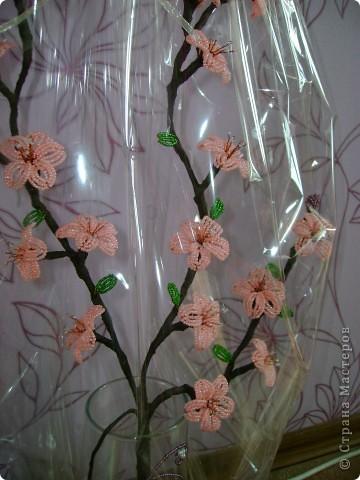 самые первые цветы,появляющиеся на фруктовых деревьях- это абрикос и персик,затем расцветает вишня.  фото 7