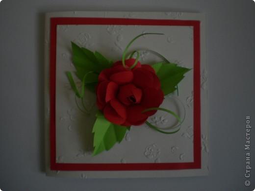 Одна болгарская роза фото 1