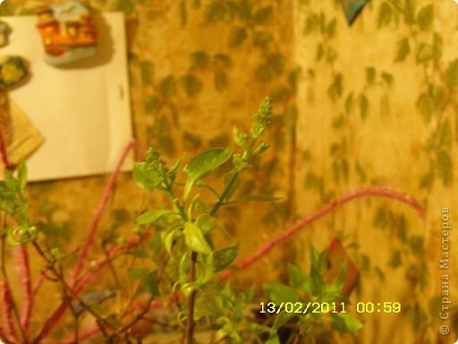 По мотивам Экзотики http://stranamasterov.ru/node/159193?c=favusers хотела накрутить кису девочку со скакалкой,Даня сказал это ниндзя маскируется;хулиганка получилась... фото 11