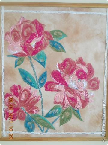 Тюльпаны фото 20