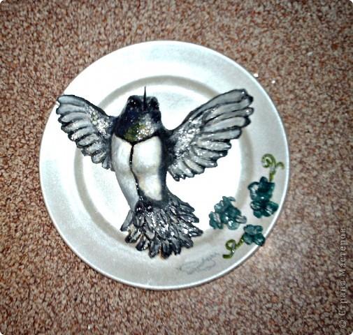 Колибри. фото 1