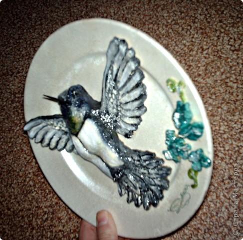 Колибри. фото 2