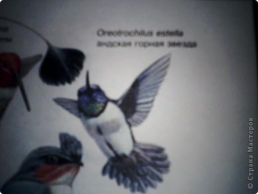 Колибри. фото 3
