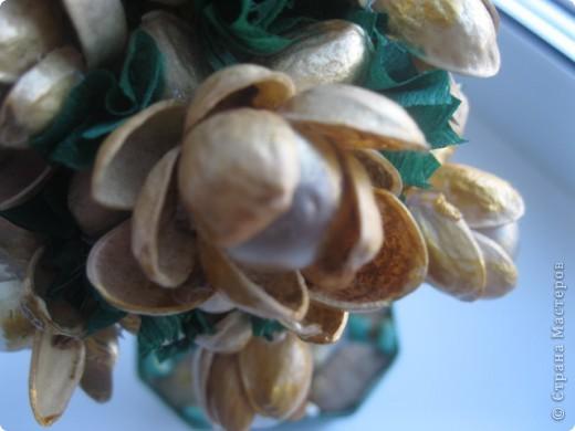 Фисташковое дерево фото 1