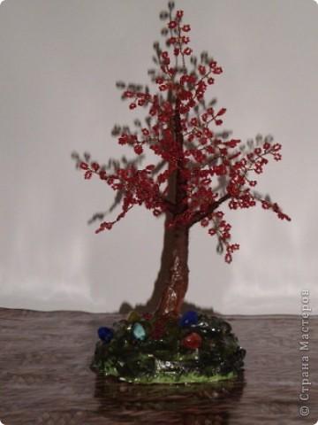 первое дерево