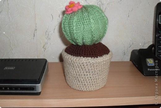 Еще кактус