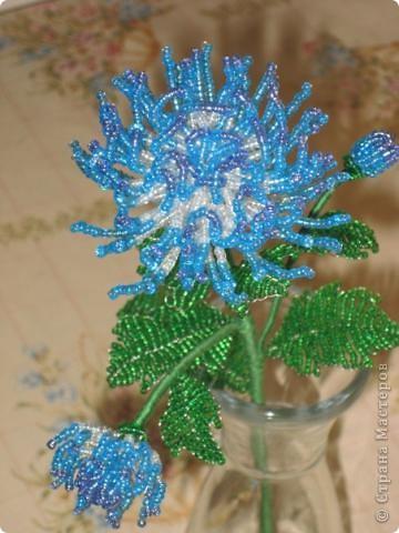 Мастер-класс Бисероплетение хризантема Бисер фото 1