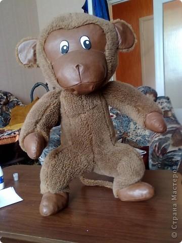 моя обезьяна Чита