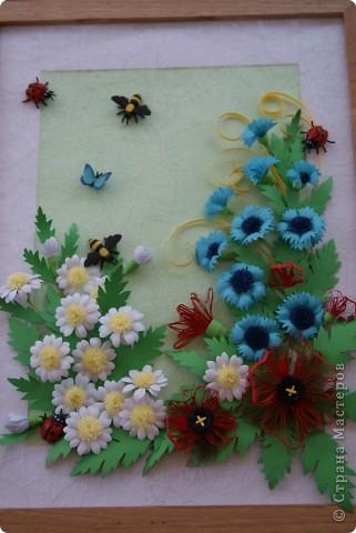 ромашки, васильки , маки и насекомые. фото 1