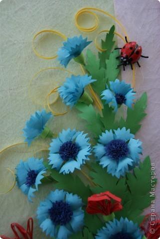 ромашки, васильки , маки и насекомые. фото 5