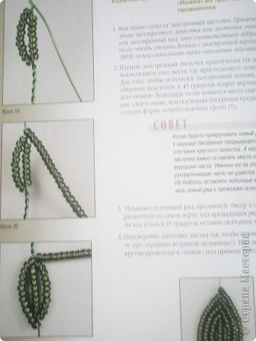 полевые цветочки фото 8