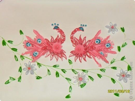 Мои розовые павлины