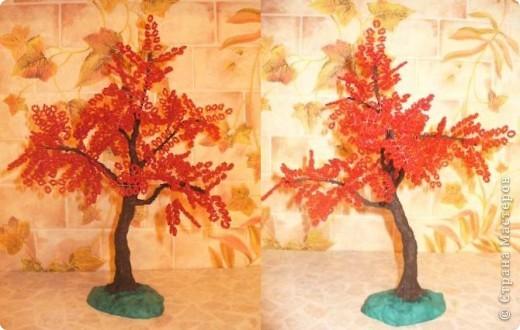 Что выросло - то выросло. Это мое 3 дерево, на бонсайстость не претендует, пока просто дерево.   фото 2