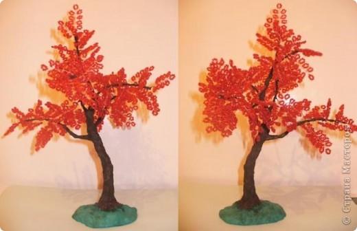 Что выросло - то выросло. Это мое 3 дерево, на бонсайстость не претендует, пока просто дерево.   фото 3