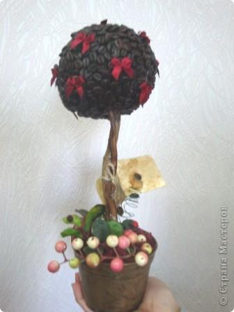 "Кофейное дерево ""Лето"" фото 1"