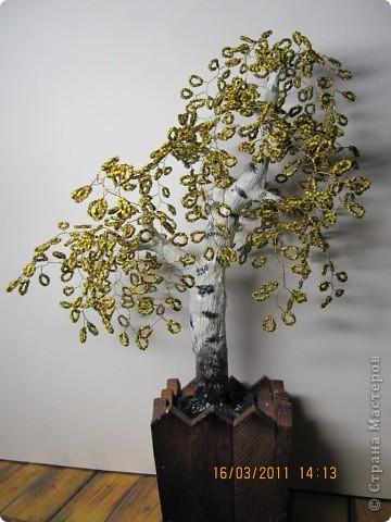 дерево с плодами. фото 2