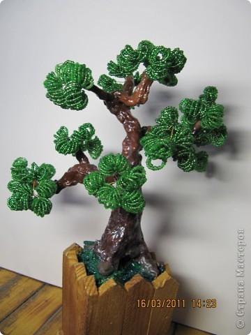 дерево с плодами. фото 3