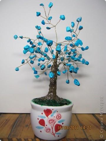 дерево с плодами. фото 4