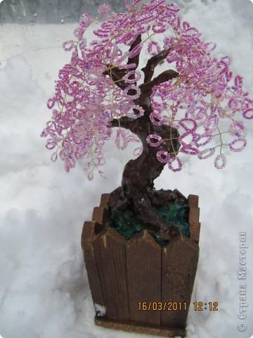дерево с плодами. фото 5