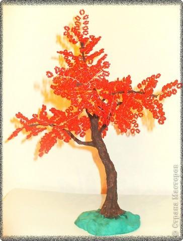 Что выросло - то выросло. Это мое 3 дерево, на бонсайстость не претендует, пока просто дерево.   фото 1