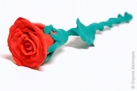 Одинокая роза фото 1