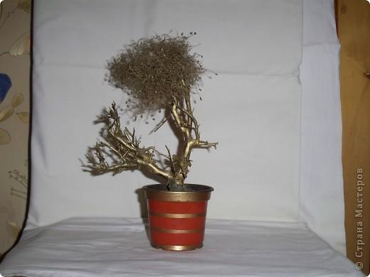деревцо из коряги