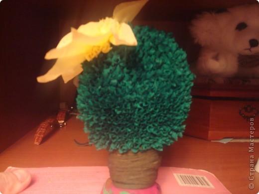 Кактус, цветущий фото 3
