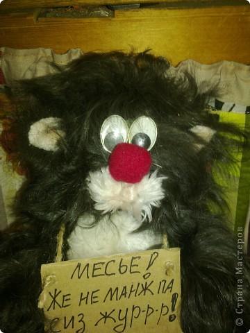 кот-бродяга фото 2