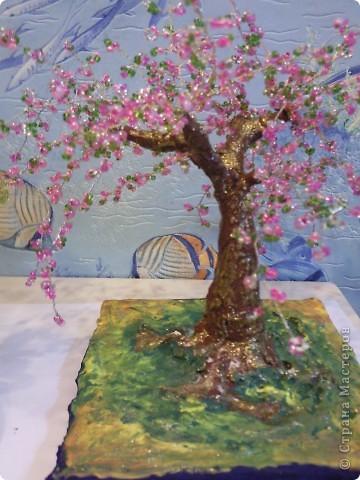 мое первое дерево: что-то вроде бонсай фото 2