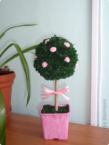 Вот и у меня выросло деревце... фото 1