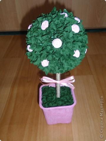 Вот и у меня выросло деревце... фото 2