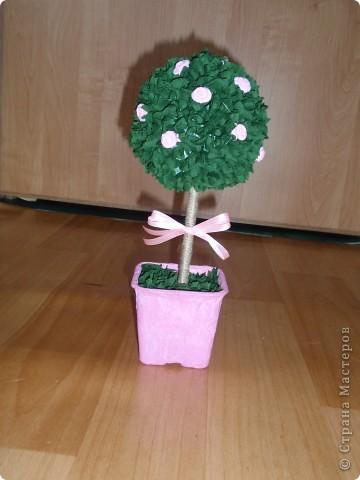 Вот и у меня выросло деревце... фото 3