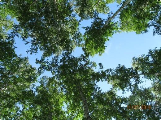 Мой любимый лес. Мой, потому, что большая часть моего детства прошла здесь.  фото 9