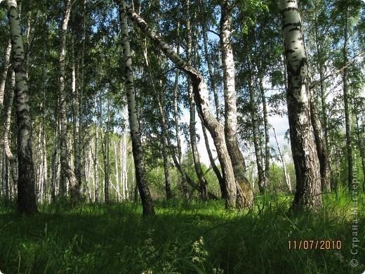 Мой любимый лес. Мой, потому, что большая часть моего детства прошла здесь.  фото 2