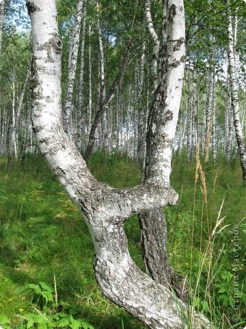 Мой любимый лес. Мой, потому, что большая часть моего детства прошла здесь.  фото 11