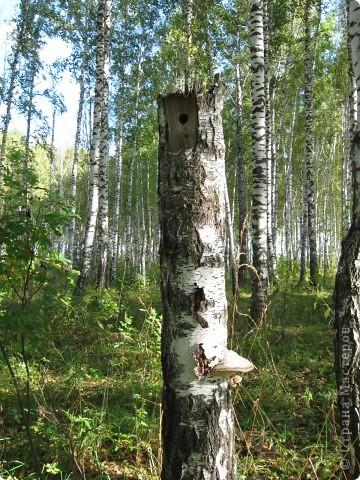 Мой любимый лес. Мой, потому, что большая часть моего детства прошла здесь.  фото 14
