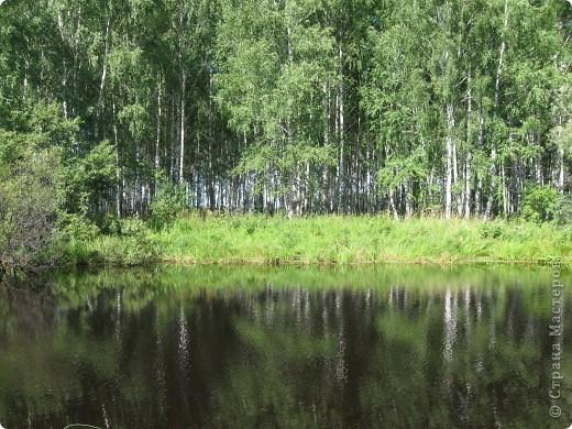 Мой любимый лес. Мой, потому, что большая часть моего детства прошла здесь.  фото 18