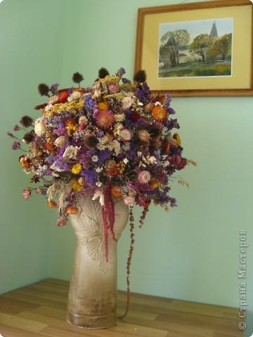 Сухоцветы фото 1