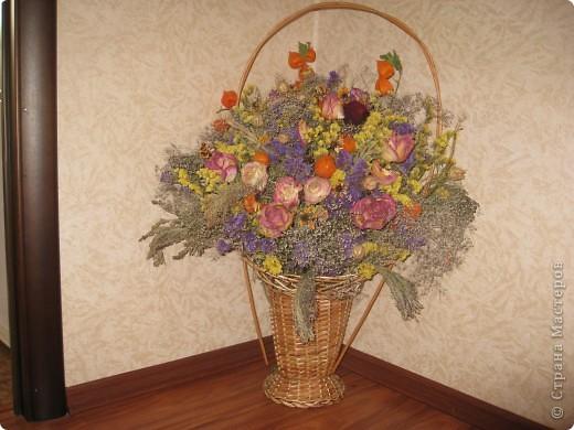 Сухоцветы фото 3