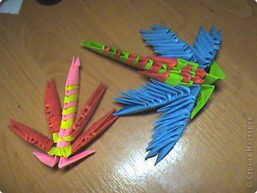 парочка стрекоз