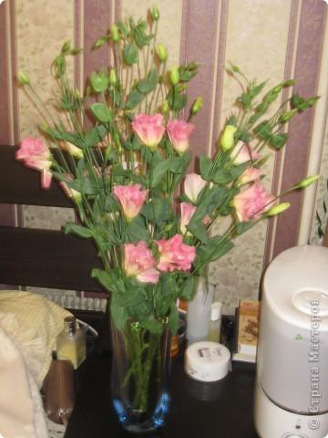 комод и цветы. так приятно на них смотреть! фото 5