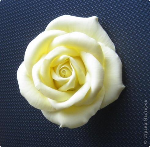 Желтая роза фото 2